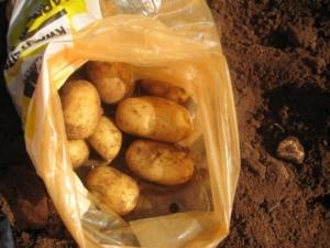 Dore aardappelen Molenaar